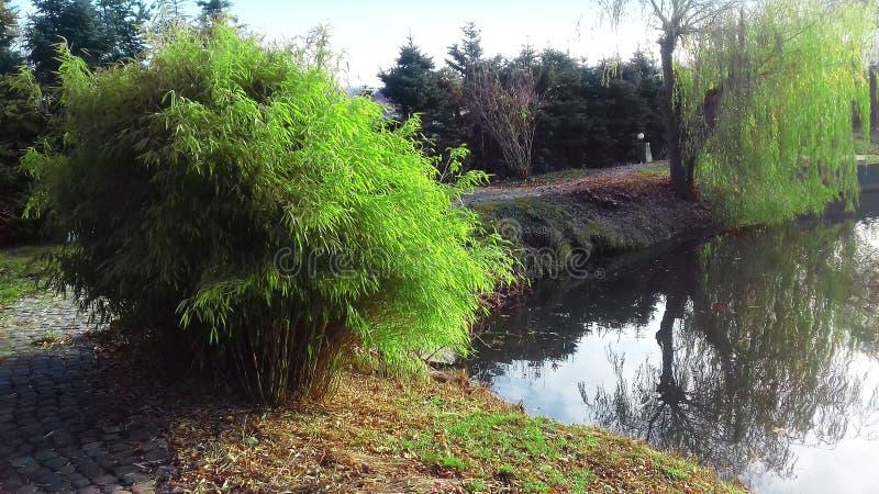 Bush dal lago Primo mattino immagine stock