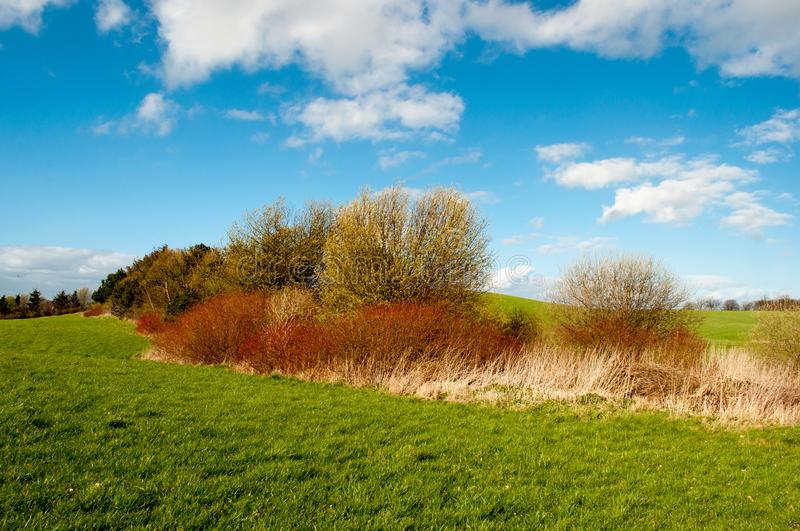 Bush on a Danish field. On a sunny day royalty free stock image