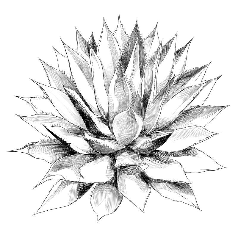 Bush-de vectorgrafiek van de agaveschets vector illustratie