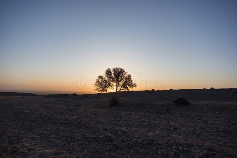 Bush in de woestijn bij zonsopgang royalty-vrije stock foto's