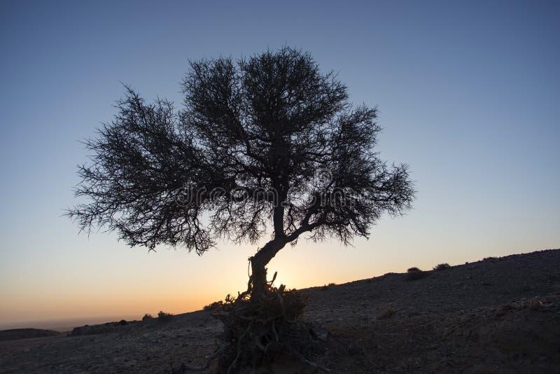Bush in de woestijn bij zonsopgang stock foto's