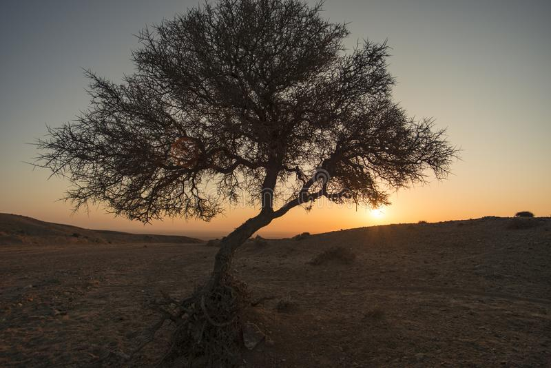 Bush in de woestijn bij zonsopgang stock fotografie