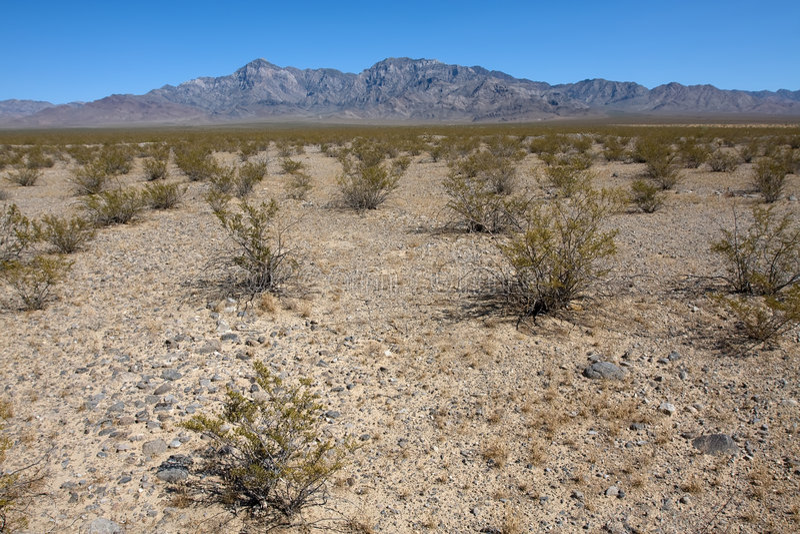 Bush in the desert. National park Joshua tree at the sunny day royalty free stock photo