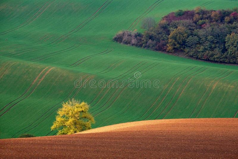 Bush dourado que incandesce no por do sol no fundo de montes verdes e de arbusto do outono Kyjov Moravia sul República Checa imagens de stock