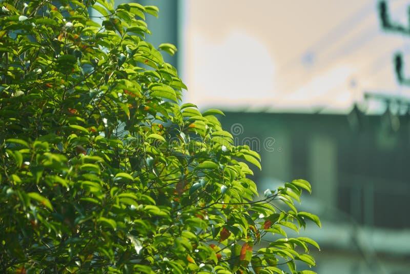 Bush eller träd på suddighetsbakgrund med kopieringstextutrymme royaltyfria foton