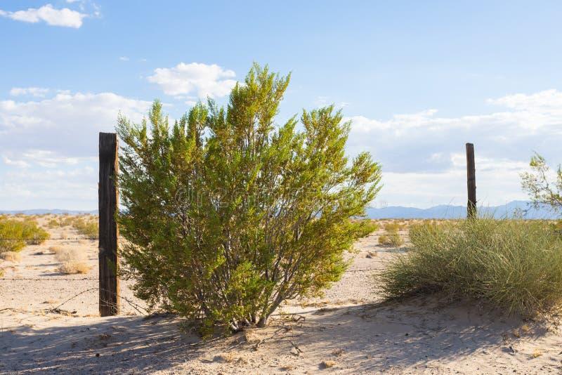 Bush et barrière Line dans le Mojave photo libre de droits