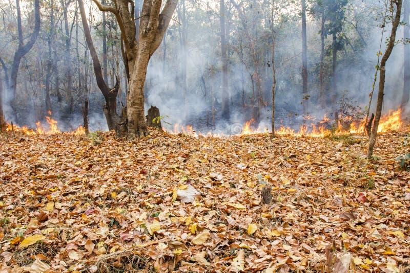 Bush-Feuer im tropischen Wald stockfotos