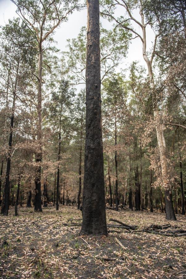Bush-Feuer in NSW Australien lizenzfreie stockfotografie