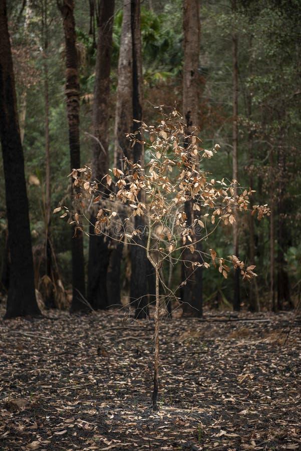 Bush-Feuer in NSW Australien lizenzfreies stockfoto