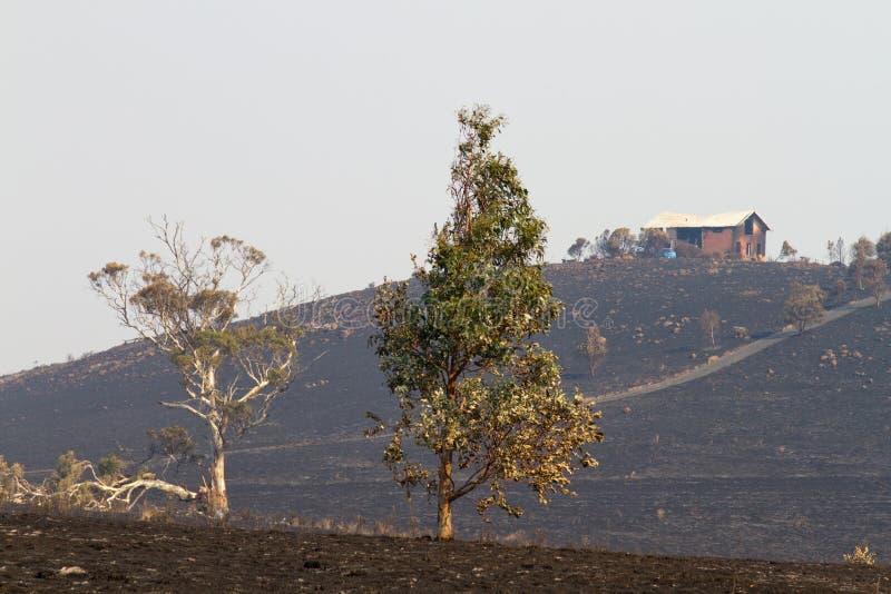 Bush-Feuer Tasmanien 2013 stockbilder