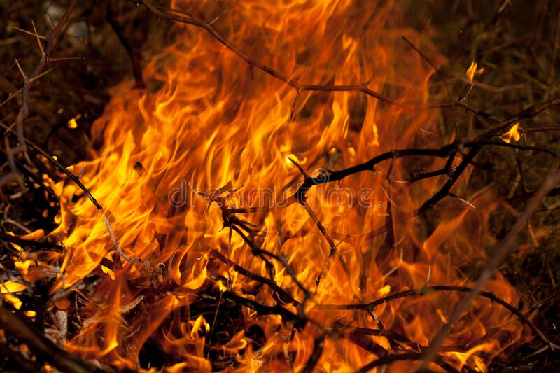 Bush fire. And flames royalty free stock photos