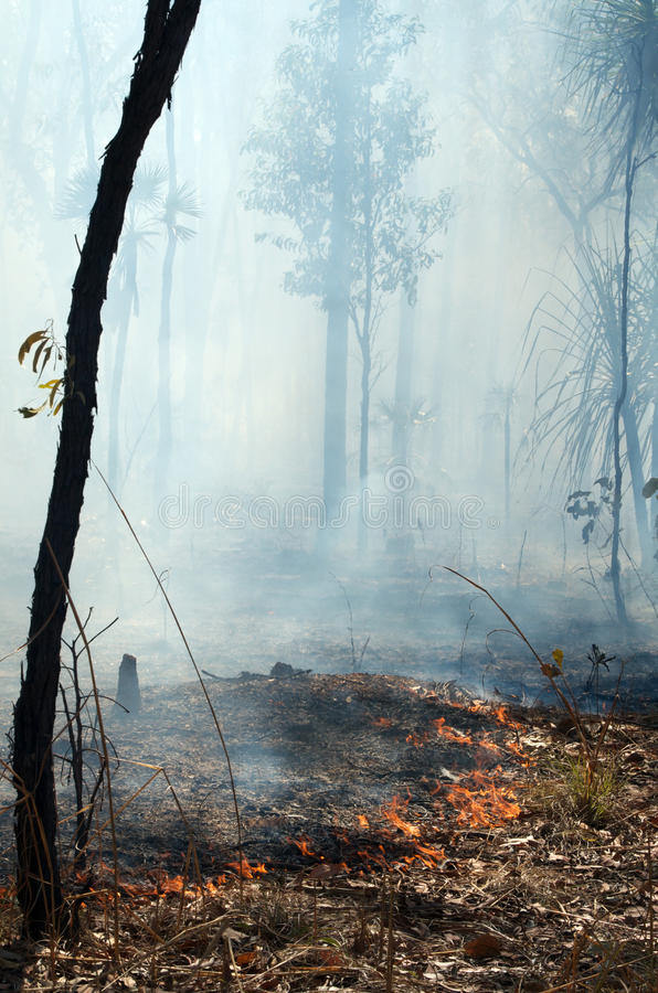 Download Bush Fire stock image. Image of load, outdoors, damage - 32808611