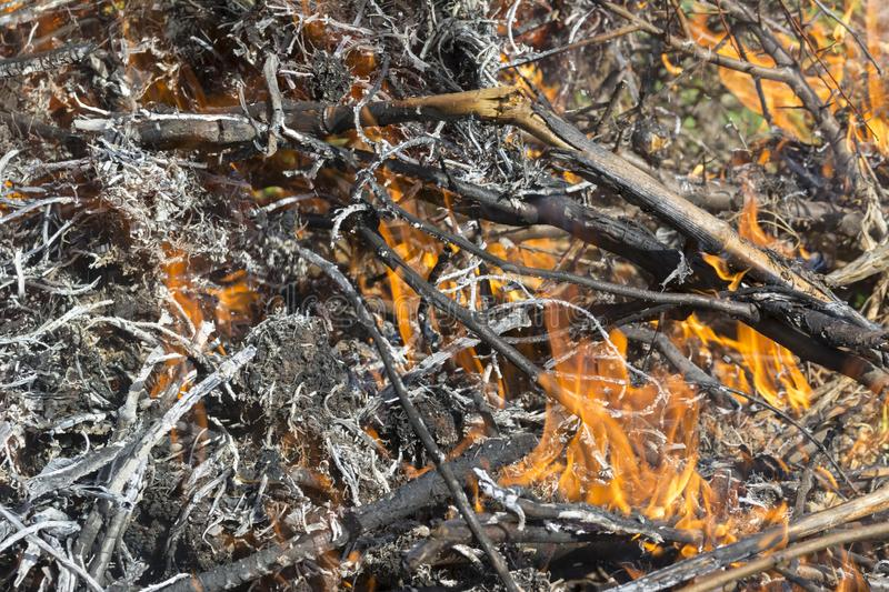 Bush on fire outdoor. Burning dry grass. Fire and smoke. background conceptual. Dangerous fires and smokes stock photography