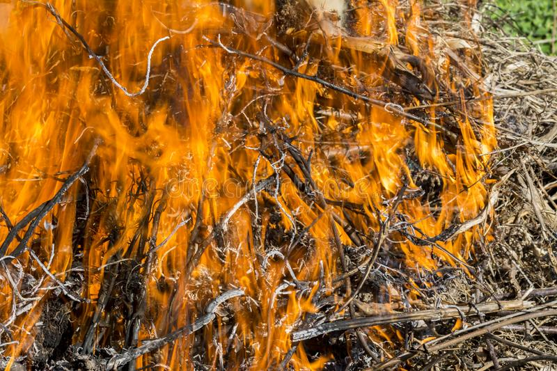 Bush on fire outdoor. Burning dry grass. Fire and smoke. background conceptual. Dangerous fires and smokes stock images