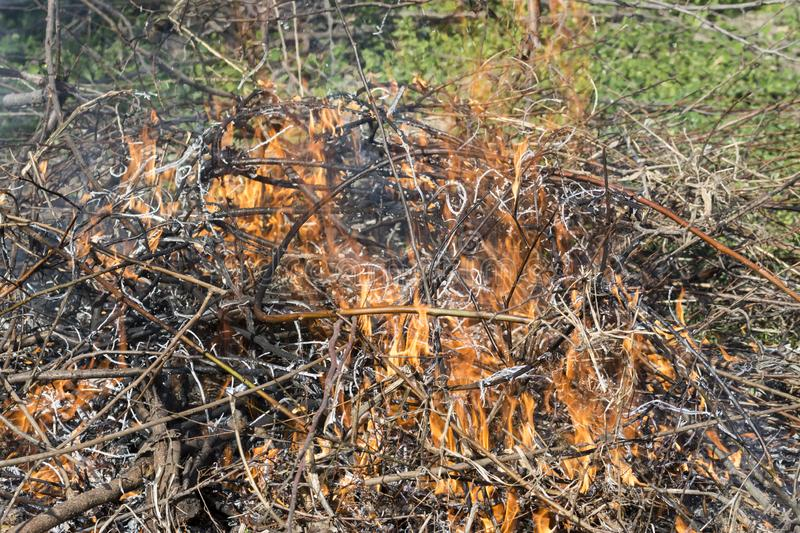 Bush on fire outdoor. Burning dry grass. Fire and smoke. background conceptual. Dangerous fires and smokes royalty free stock photo