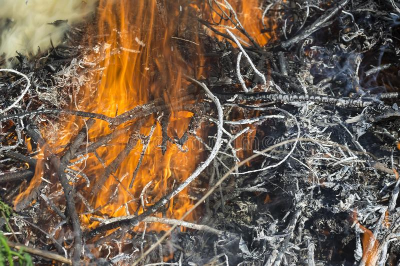 Bush on fire outdoor. Burning dry grass. Fire and smoke. background conceptual. Dangerous fires and smokes stock photos
