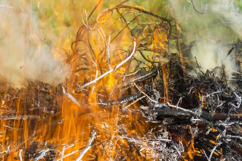 Bush on fire outdoor. Burning dry grass. Fire and smoke. background conceptual. Dangerous fires and smokes royalty free stock photos