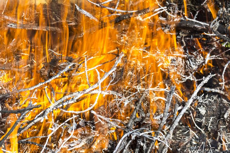 Bush on fire outdoor. Burning dry grass. Fire and smoke. background conceptual. Dangerous fires and smokes stock photo