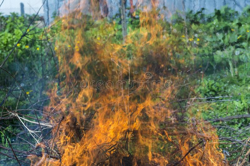 Bush on fire outdoor. Burning dry grass. Fire and smoke. background conceptual. Dangerous fires and smokes stock image