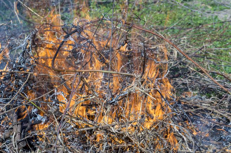 Bush on fire outdoor. Burning dry grass. Fire and smoke. background conceptual. Dangerous fires and smokes royalty free stock images