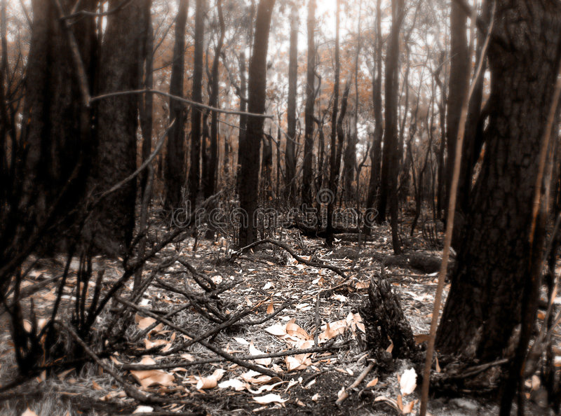 Download Bush Fire Scene stock photo. Image of forest, tree, caught - 320