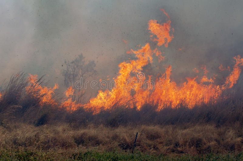 Bush Fire. Strong fire in the Australian bush stock image