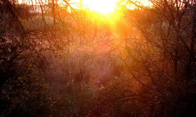 BUSH FLOODED WITH SUNLIGHT stock images