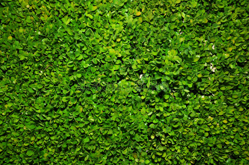 Bush Green Background Stock Photos