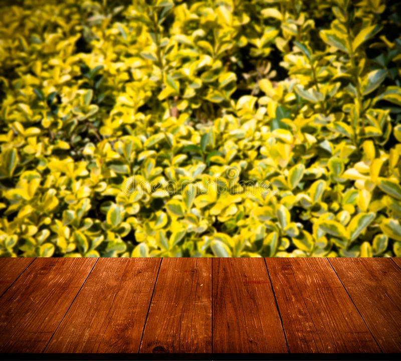 Bush with green leaves over old light wooden table or board. Col. Lage. Selective Focus. Toned stock image