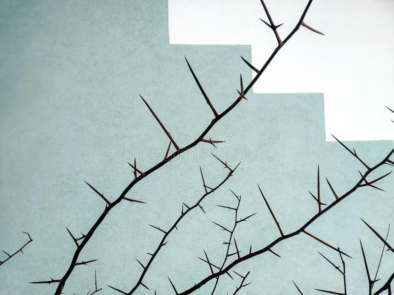 The Bush of hawthorn in winter royalty free stock photography