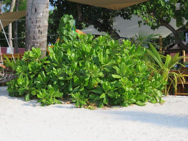 Bush na plaży obraz stock