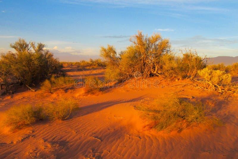 Bush no deserto no por do sol imagens de stock royalty free