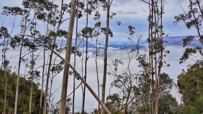 Bush, nubes y picos distantes, Katoomba, BlueMountains, Australia imagen de archivo libre de regalías