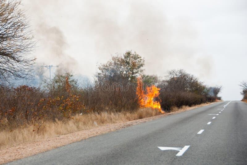 Bush ogień fotografia royalty free