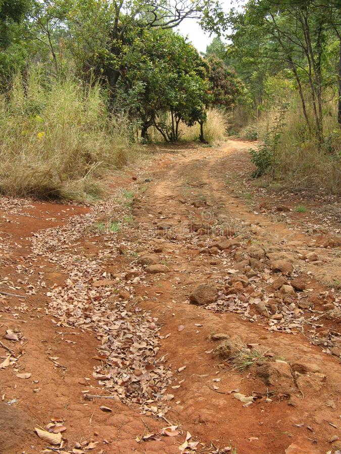 Bush path, Malawi stock foto