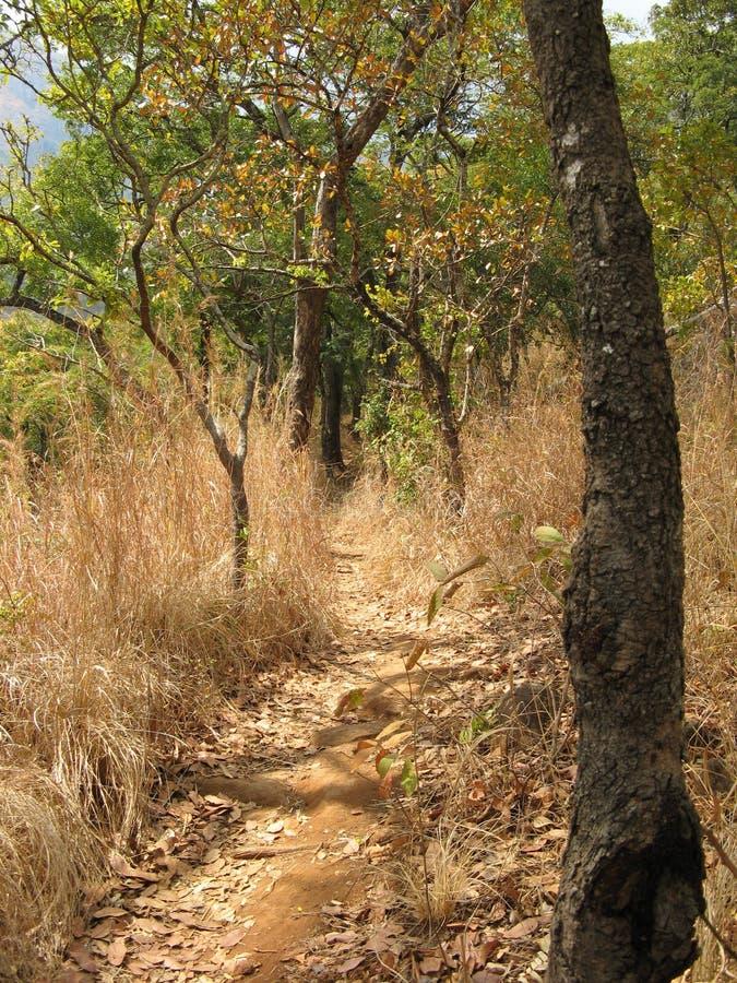 Bush path, Malawi stock photo