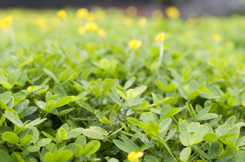 Download Bush plants stock photo. Image of gardening, shallow - 22481560