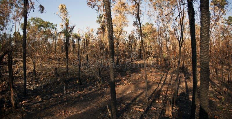 Bush quemado del fuego de cepillo - Territorio del Norte imagen de archivo