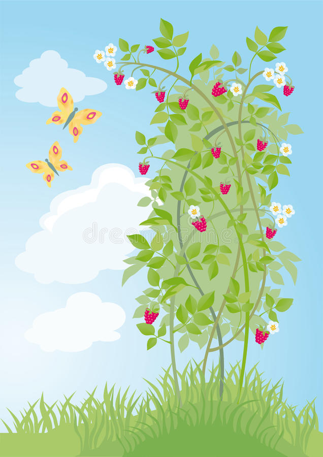 Bush of raspberry. On a background sky with butterflies vector illustration