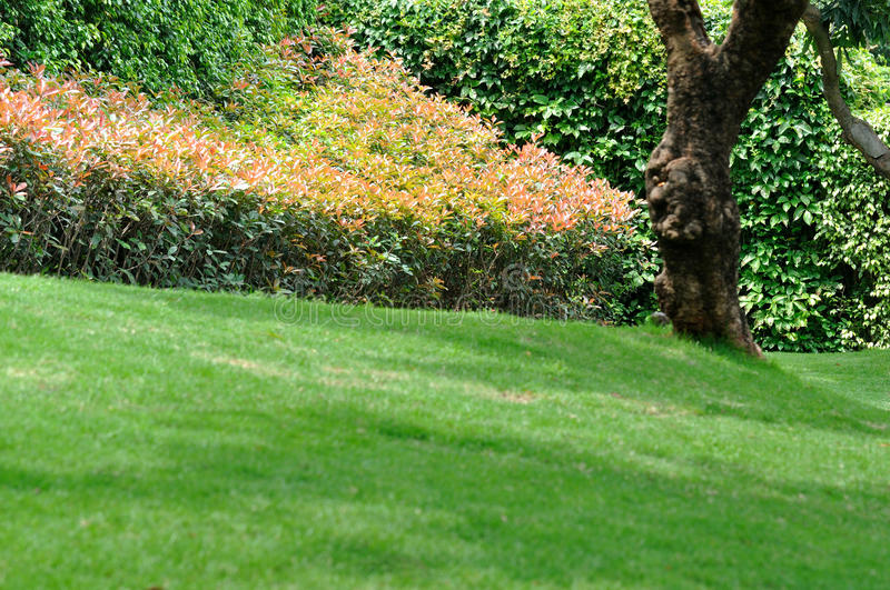 Download Bush With Red Leaf, Trees And Meadow Stock Photo - Image: 14376092