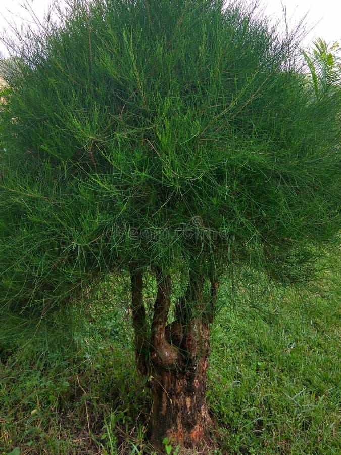 Bush roślina w ogrodowej fotografii obraz stock