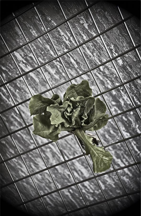 Bush salad on an abstract background royalty free stock image