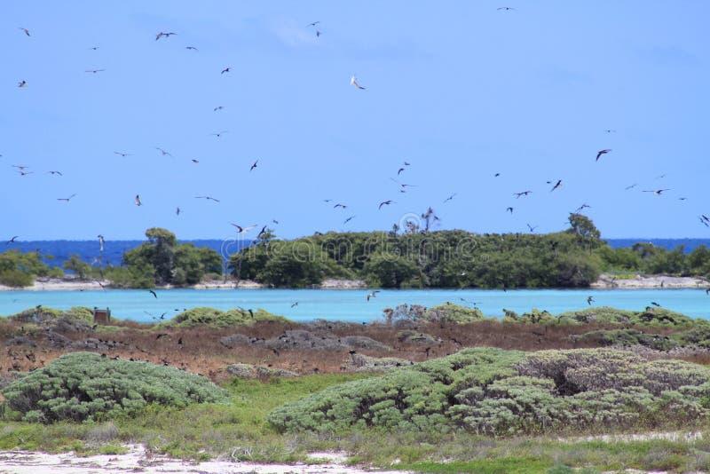 Bush-Schlüssel-Vögel stockfotografie