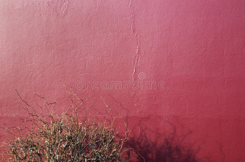 Bush with shadow on a red wall. Bush without leaves casting its shadow on a red wall of a house during winter stock image