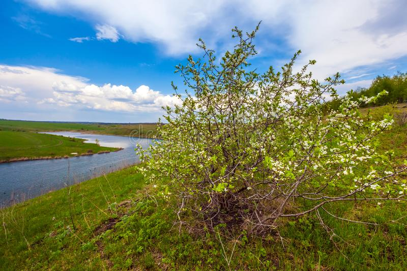 Green spring in Russia. stock photos