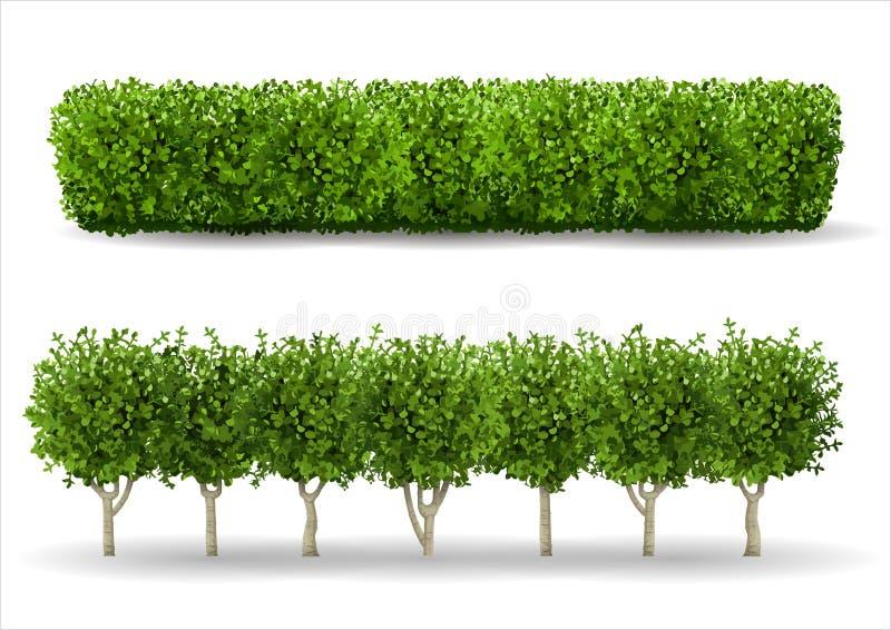 Bush sotto forma di barriera verde illustrazione vettoriale
