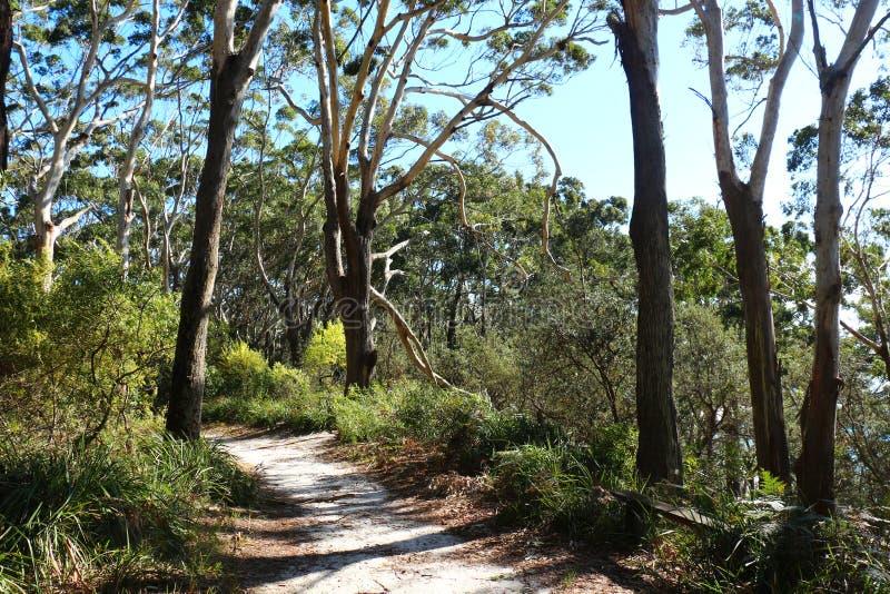 Bush-spoor door Jervis Bay National Park Australia stock afbeeldingen