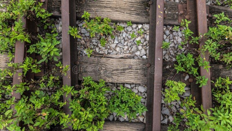 Bush-sporen stock foto