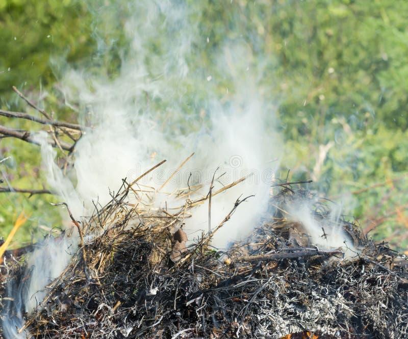 Bush su fuoco all'aperto Erba asciutta Burning Fuoco e fumo E fotografia stock