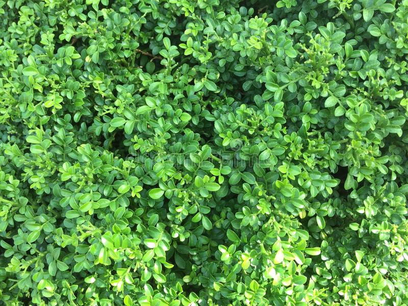 Bush tło zdjęcie stock